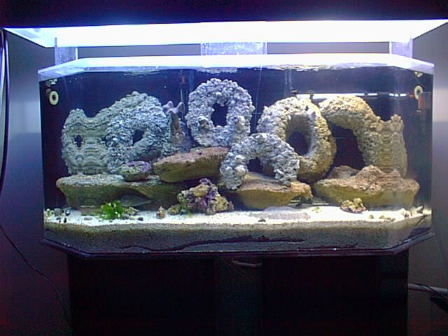 best saltwater fish for 60 gallon tank 2017 fish tank. Black Bedroom Furniture Sets. Home Design Ideas